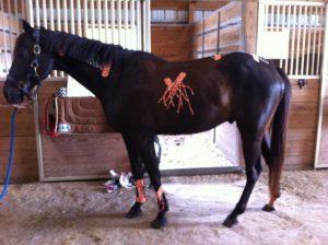 rocktape-equine